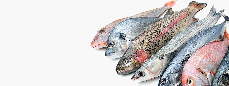 Заморож Рыба