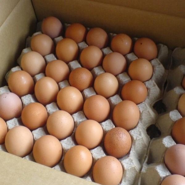 Яйцо куриное  С1 шт